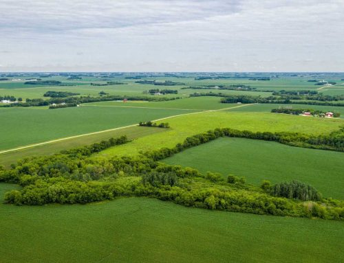 50.00± Acre Farmland | Section 17  Vernon Township | Dodge County, MN
